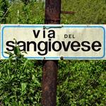 Vini tipici Romagna
